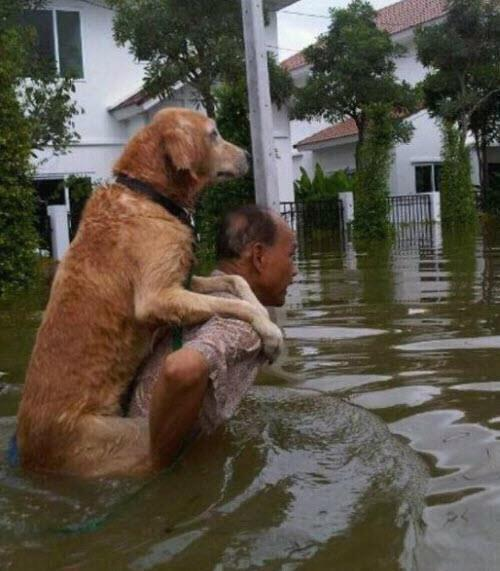 "High water / floods  on  the  Philippines... ""Come on my back doggie, I  will rescue you  through the high water"" ❤"