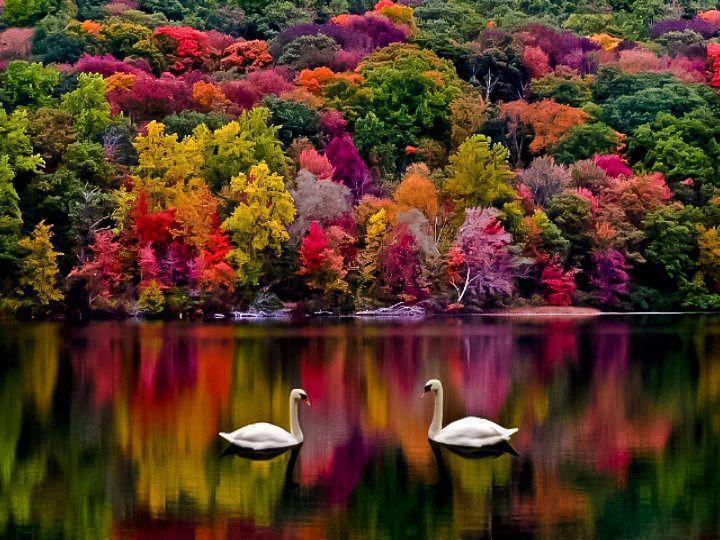 Beautiful, colorful  &  peaceful   *INDIAN  SUMMER*...  looking  like  in  PARADISE❤