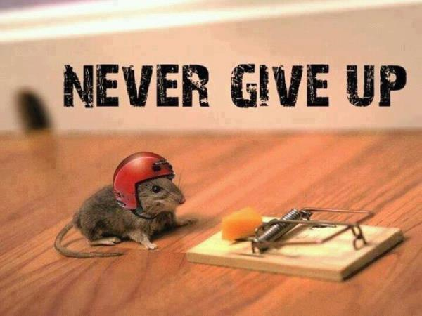 Never  give  up !    SWEEEEEEEET..... ❤