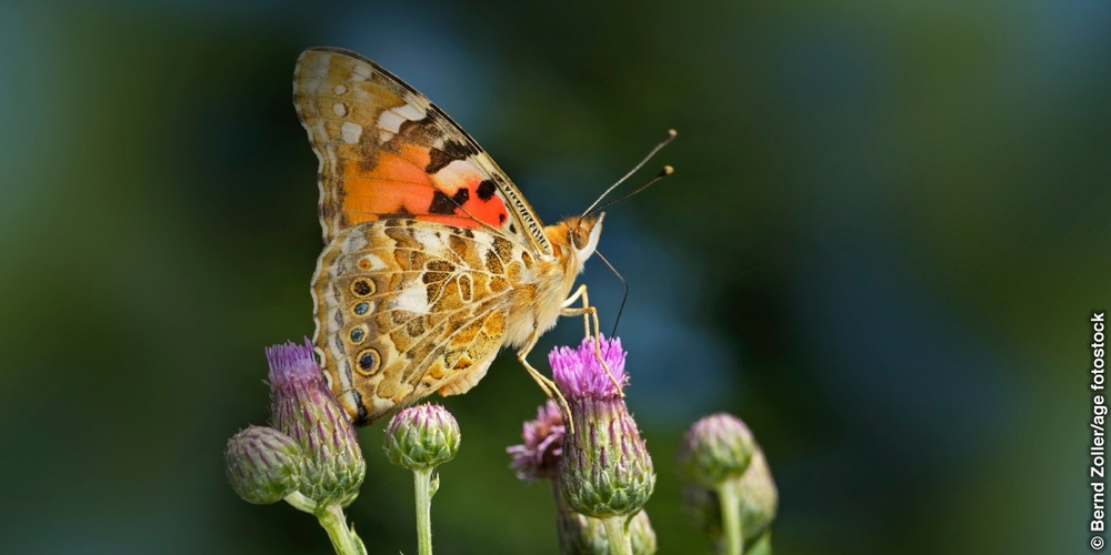 The Painted Lady — A Mystery Revealed.jpg