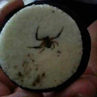 Spider in an Oreo