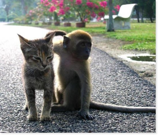 Monkey and Kitty making friends