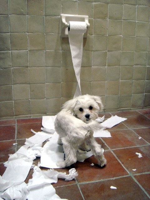 puppies and toilet paper